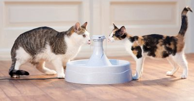 Best Pet Fountains
